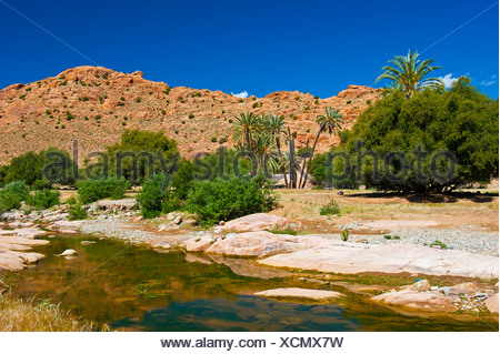 Typical mountain landscape with a river bed, Date Palms (Phoenix) and Argan Trees (Argania spinosa), Anti-Atlas Mountains - Stock Photo