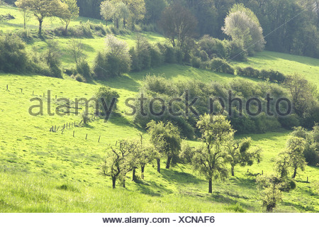 Bocagelandschap met hagen en bomen, Voeren, Belgi Bocage landscape with hedges and trees, Voeren, Belgium - Stock Photo