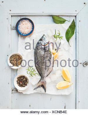 Fresh uncooked sea bream fish with lemon, herbs, ice and spices on rustic blue wooden board backdrop, top view - Stock Photo