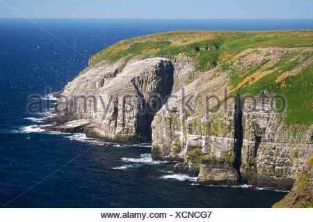 Sheer cliffs and coastline at the Cape St Mary's Ecological Reserve, Cape St Mary's, also known as The Cape, The Cape Shore, Pla - Stock Photo