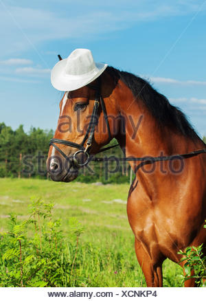 portrait of bay horse with hat - Stock Photo