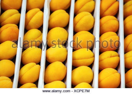 Apricots as background - Stock Photo