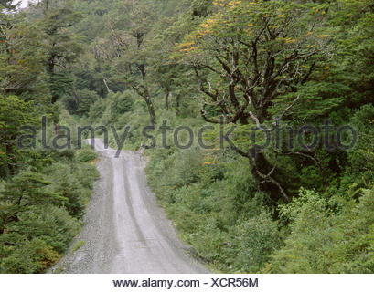 Road in Queulat National Park. Aysen region, Patagonia. Chile - Stock Photo