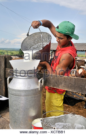 Teenager pouring fresh milk into a large milk churn, traditional dairy farming, settlement of the Movimento dos Trabalhadores - Stock Photo