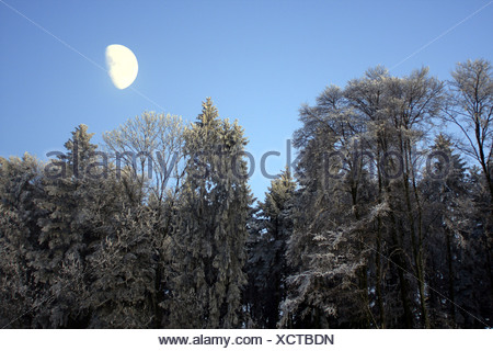 forest in winter with hoar frost with moon light, Switzerland - Stock Photo