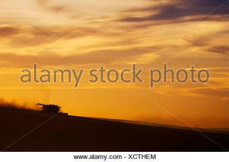A John Deere combine harvests wheat on rolling hillside terrain at sunset / Palouse Region, near Pullman, Washington, USA. - Stock Photo