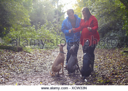 Young couple and their three obedient whippets in woods - Stock Photo