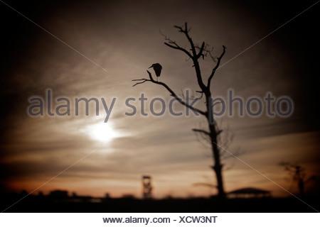 Single bird resting in a tree at Big Lagoon State Park, Pensacola, Florida, USA - Stock Photo