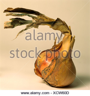 Onion with peeling skin - Stock Photo
