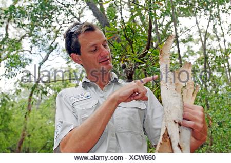 Ranger explaining details about the Scribbly gum (Eucalyptus haemastoma), Fraser Island, Queensland, Australia - Stock Photo