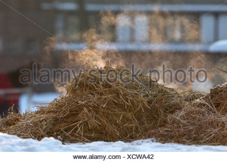 Hoppegarten, Germany, steaming manure pile in winter - Stock Photo