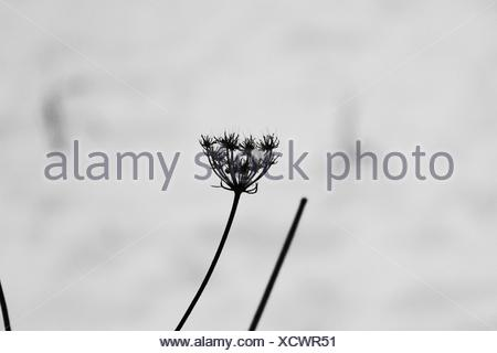 Close-Up Of Plant Against Blurred Background - Stock Photo