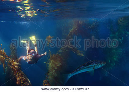 Teenage girl snorkeling in ocean through kelp - Stock Photo