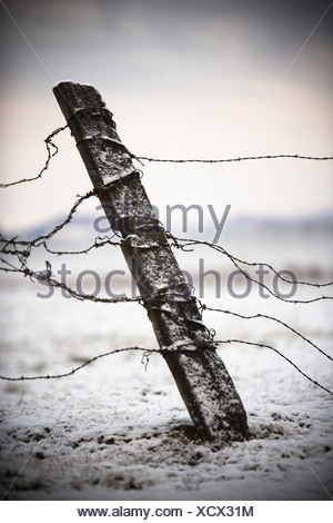 Old fence post and barbed wire in the snow. - Stock Photo