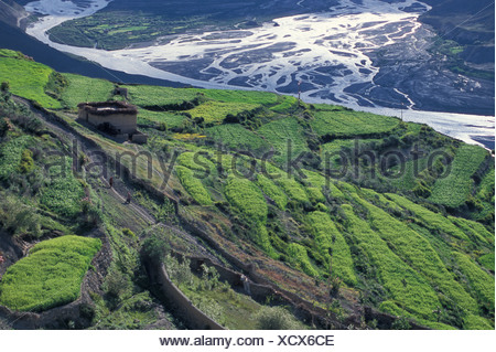Fields, Dhankar, Spiti, Himachal Pradesh, Himalaya, North India, India, Asia - Stock Photo