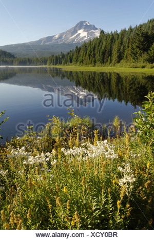 Trillium Lake volcano Mount Hood Cascade Range Oregon USA America American mountain mountains blue sky body of water summit - Stock Photo