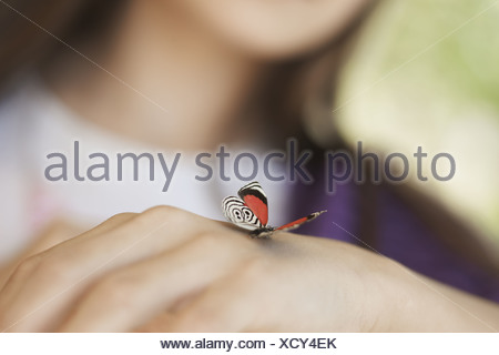 Utah USA child examining butterfly which has landed on hand - Stock Photo