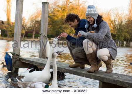 Couple feeding swans - Stock Photo