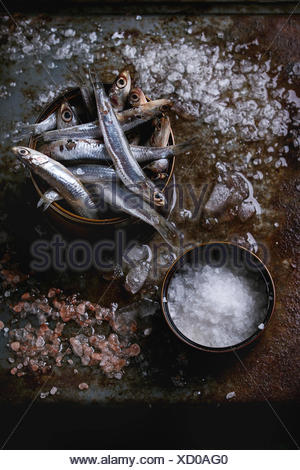 Lot of raw fresh anchovies fishes in tin can on crushed ice with pink and sea salt over old dark metal background. Top view. Sea food background theme - Stock Photo