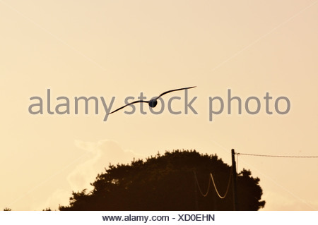 Seagull at sunset - Stock Photo