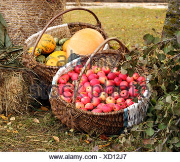 Apples and pumpkins stacked in a large rustic baskets - Stock Photo