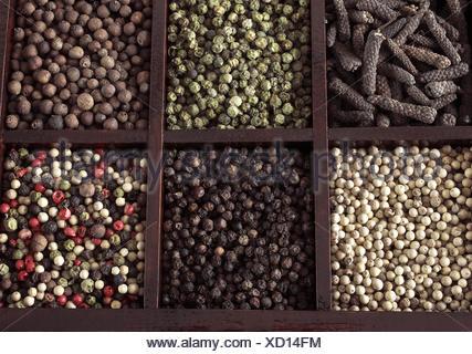 BOX WITH WHITE PEPPER, BLACK PEPPER, GREEN PEPPER, FIVE PEPPERCORNS, JAMAICA PEPPER AND LONG PEPPER. - Stock Photo
