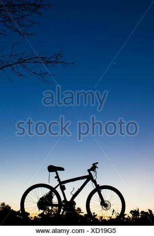 Silhouette of MTB bike at sunset under tree on blue sky with venus planet. - Stock Photo