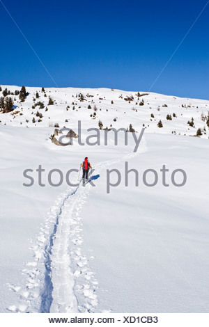 Ski mountaineers during ascent to Mt Cima Bocche above Passo Valley, Dolomites, Mt Cima Bocche at back, Trentino, Italy, Europe - Stock Photo