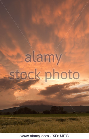 sunset over a field; manitoba, canada - Stock Photo