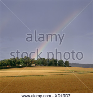 View of rainbow over field - Stock Photo