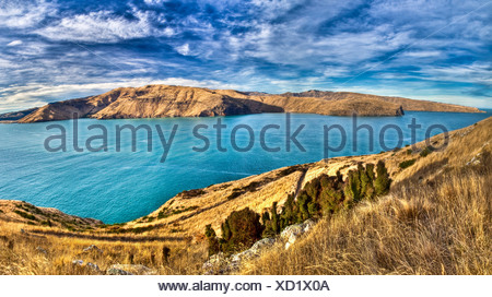 Lyttelton harbour from Godley Head, tussock grass dried off in autumn, Banks Peninsula, near Christchurch, Canterbury, New - Stock Photo