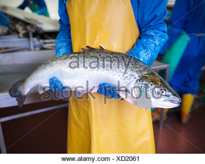 Fishmonger holding catch of the day - Stock Photo