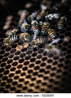 Bees at work in hive, close-up - Stock Photo