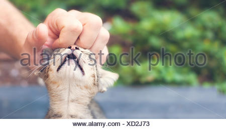 spoilt cat enjoying a helping hand - Stock Photo