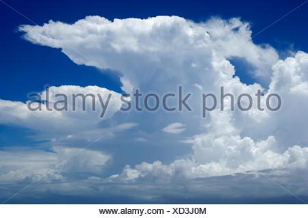 Cumulonimbus cloud among Cumulus congestus clouds - Stock Photo