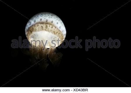 Jellyfish Under Water - Stock Photo