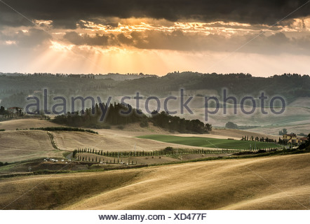 Rolling hills with dark atmospheric clouds, corn fields at dusk, Villamagna, Tuscany, Italy, Europe - Stock Photo