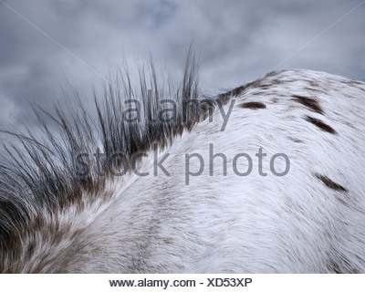 Close up of horse's mane - Stock Photo