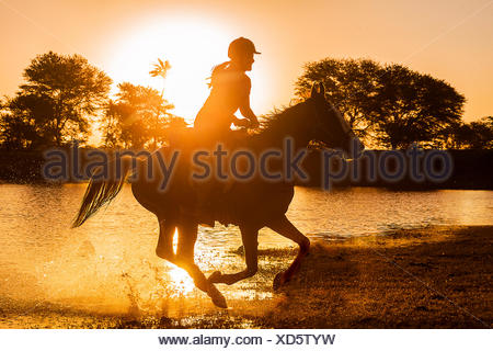 Kathiawari Horse. Woman rider galloping on a chestnut mare, silhouetted against the setting sun. Rajasthan, India - Stock Photo