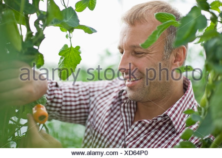 Farming vegetables and fruits - Stock Photo