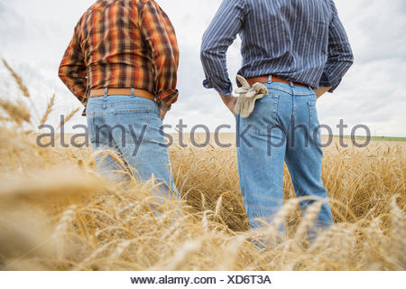 Farmers standing in wheat field - Stock Photo