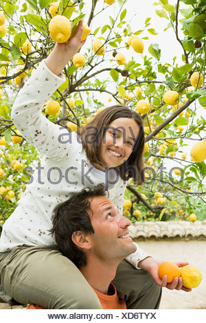 Girl on fathers shoulders picking lemons - Stock Photo