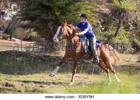 Kathiawari Horse. Woman rider galloping on a chestnut mare. Rajasthan, India - Stock Photo