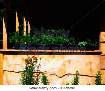 Creagh, Baltimore, Co Cork, Ireland; Young Plants In A Potting Shed - Stock Photo