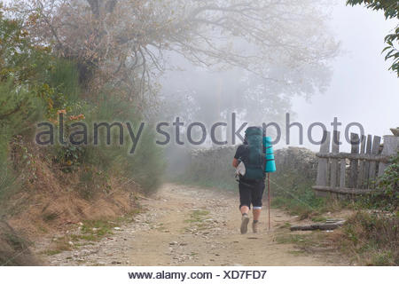pilgrim on the Way of St. James between Mont�n and Fontearcuda, Spain, Galicia, Lugo, Weg von Montán nach Fontearcuda - Stock Photo