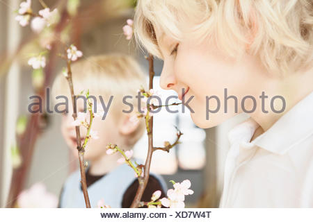 Close up of two brothers and blossom twigs in sitting room - Stock Photo