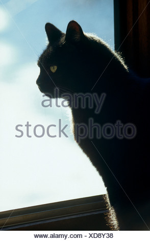 Close-up of cat sitting on window - Stock Photo