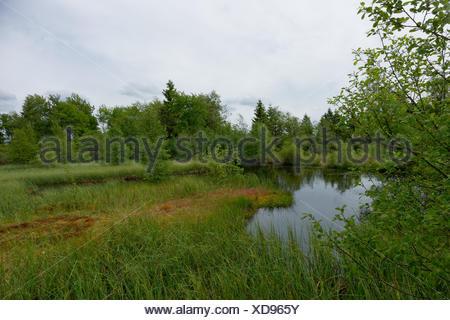 moorsee moorvegetation - Stock Photo
