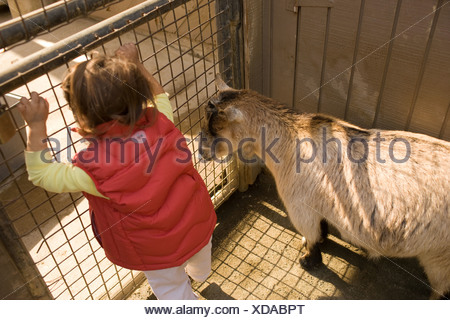Young girl with goat at petting zoo - Stock Photo