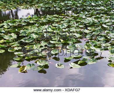 Close up of leaves in water - Stock Photo